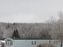 Ice storm 2019 (creed_400) Tags: ice storm freezing rain february winter belmont west michigan