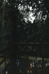 (jocrokidakis) Tags: pássaros natureza mata floresta riodejaneiro angra dos reis