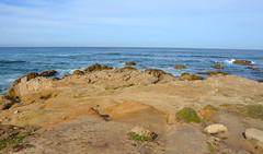 DSC_0251 (afagen) Tags: california pacificgrove asilomarstatebeach montereypeninsula asilomar beach pacificocean ocean