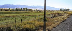 Shot Directly into the Sun (Eclectic Jack) Tags: eastern oregon trip october 2018 rural agriculture farm farming autumn fall mountains irrigation abandoned house structure home cattle livestock gold green blue gray grey sky telephone pole shadow road pavement fence cow animal tree trees forest