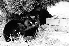 Black cat (Mario Ottaviani Photography) Tags: sony sonyalpha italy italia paesaggio landscape travel adventure nature scenic exploration view vista breathtaking tranquil tranquility serene serenity calm marioottaviani viaggio avventura natura esplorazione excursion escursione black white blackandwhite monochrome monocromo biancoenero sigurtà cat gatto nero