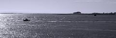 View from the bay (mostodol) Tags: view panorama morbihan quiberon bretagne brittany monochrome france french breizh bzh baie bay atlantique atlantic eau water ocean mer summer été waterscape