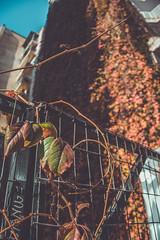 Wall Garden (koskaram) Tags: thessaloniki θεσσαλονίκη macedonia μακεδονία nature