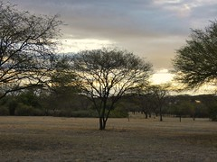 Sunset is near, view from my cabin (Linda DV) Tags: lindadevolder travel africa kenya tanzania 2018 nature victorialake geotagged fauna flora