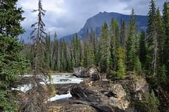 YNP_017 (Kerri M.) Tags: yohonationalpark canadaparks nationalparks kickinghorseriver vista river fieldbc canadianrockies