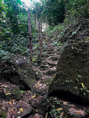 A path out of the forest (dcdc887) Tags: ecuador galapagos path trek trail camino sendero stairs escalera rock roca piedra stone forest bosque