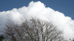 Treetop framed (MaxUndFriedel) Tags: nature sky cloud tree beech spring march