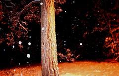 Dark forest (thomasgorman1) Tags: tree forest nikon snow snowfall flash dark az arizona overgaard snowing pine ponderosa night