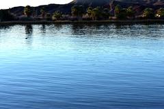 Silent flow (thomasgorman1) Tags: river water current flow nikon landscape trees nature desert az arizona colorado shore bird