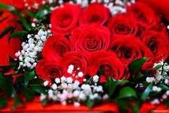 Love & Affection  • #inexplore (NadzNidzPhotography) Tags: ilovenature naturephotography nature nadznidzphotography flowers redroses flowerphotography bouquet flowerpower flora rose roses rosebouquet rosesarered