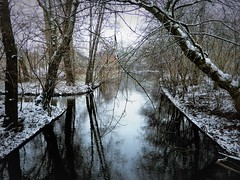 Winter Pond (Explored) (Clare-White) Tags: winter reflections amsterdam cold weather snow trees branches shapes trunks water nature