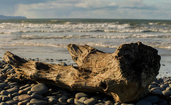 Washed Up (Mark Wasteney) Tags: sea seaside seascape beach stones shore waves wood tree driftwood flotsamandjetsam westcountry northdevon westwardho