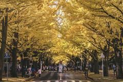 DSC_9503 (juor2) Tags: hokkaido university ginkgo autumn yellow campus nikon scene travel japan d4 reflection