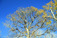 Turning of the Season (Worthing Wanderer) Tags: nymans clouds autumn november sunny sussex westsussex park nationaltrust woodland woods forest