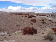 The Petrified Forest, AZ USA (A. E. Newman) Tags: usa grandcanyon vacations travel petrifiedforest trip 2004 vacation scenic az