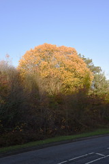 DSC_2254 (PeaTJay) Tags: nikond750 reading lowerearley berkshire gardens outdoors flora fauna plants flowers trees bushes