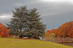 Trois persistants cernés par les caduques (Jean-Marie Lison) Tags: eos80d tervuren parc pelouse étang arbres pont sigmaart