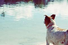 Noosa, Australia (soojeensin) Tags: noosa dog beach 강아지 개 누사 브리즈번 호주 australia brisbane qld queensland