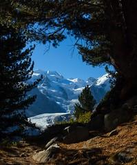 Scorcio sui ghiacci (ez.81) Tags: svizzera grigioni engadina bernina ghiaccio montagna alberi cielo natura