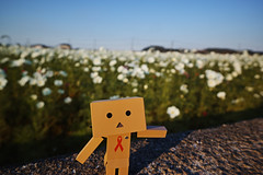 DP0Q2931 (noryouforme) Tags: sigma dp0quattro foveon quattro sanko nakatsu oita japan danbo danboard yotubato figure