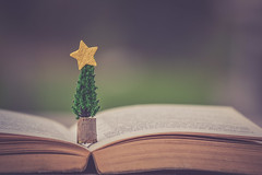 DAY 14... DECEMBER (Ayeshadows) Tags: christmas tree minimalism star book stories december winter joy