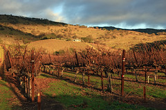 The House on the Hill (JB by the Sea) Tags: napavalley napa winecountry california december2018 winery vineyard chimneyrock chimneyrockwinery
