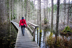 This Flooded World (Los Paseos) Tags: sunshinecoast britishcolumbia forest hike boardwalk smugglerscove