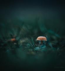 in a sea of green (robert.lindholm87) Tags: canon eos r canonr mushroom mushrooms macro bokeh oreston meyer görlitz 50mm dof green autumn november closeup nature close colors lightroom sweden moody mood dark atmosphere