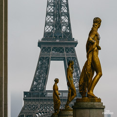 Focus Stacking (brenac photography) Tags: d850 europe nikon nikond850 brenac brenacphotography france sigma paris fr
