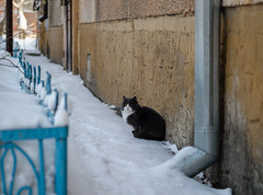 hd_20190106122952 (anatoly_l) Tags: russia siberia kemerovo city winter january 2019 snow cats