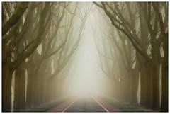 Road to nowhere (Rob Schop) Tags: mist handhold mookhoek strijen mood road trees pola hoyafilters sonya6000 sony55210oss tele nederland