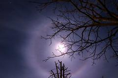 lunar halo (Scorpion-66) Tags: alonelunare lunarhalo moon stars canon760d tokina1120 nisinaturalnight