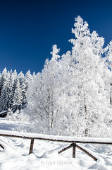 White, cold and beautiful (Toni Terziev) Tags: 500px rhodope mountains mountain landscape landscapes bulgaria beautiful home outdoor winter snow