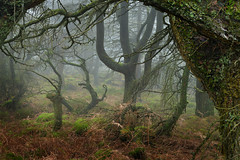 Forest dreams (PentlandPirate of the North) Tags: forestdreams theroaches staffordshire beauty mysterious adventure escape magical mist fog peakdistrict fairytale woods