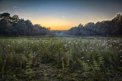 Schans (Geert E) Tags: nature sunset flowers hdr woods schans gerhees