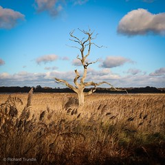 Snape Maltings Suffolk (richard_t59) Tags: lightroom lightroommobile sky blue clouds toystory tree marshland m3 eos suffolk snape