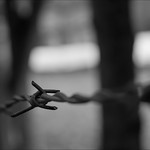 Barbed Wire thumbnail