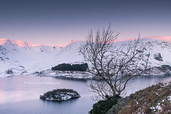 Light On The Land (.Brian Kerr Photography.) Tags: cumbria lakedistrict landscapephotography haweswater lakes photography nikon d850 formatthitech firecrest vanguarduk availablelight briankerrphotography sunrise tree