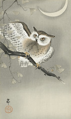 Long-eared owl in ginkgo (1900 - 1930) by Ohara Koson (1877-1945). Original from The Rijksmuseum. Digitally enhanced by rawpixel. (Free Public Domain Illustrations by rawpixel) Tags: pdproject21batch2x otherkeywords tagcc0 animal antique art asian bird drawing ginkgo illustration japan japanese koson longearedowl museum ohara oharakoson old paint rijksmuseum vintage
