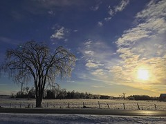 The morning after (jessalynn_sammons) Tags: iphone beautiful clouds sky tree sunrise morning icestorm ice