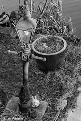 IMGP9353 (Brian H Whittle) Tags: blackwhite leedsliverpoolcanal rufford canal