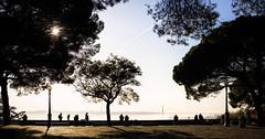 Lisbon, December 21, 2018 (Ulf Bodin) Tags: canonrf50mmf12lusm trees mist pine silhouette lisbon lisboa urbanlife people canoneosr portugal outdoor panorama lissabon miradourodocastelodesãojorge shaodows pt