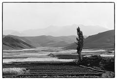 82207_07 High Atlas, Morocco, 1982 (Wolfgang_Kraus) Tags: morocco maroc marokko atlas mountains analog hautatlas imazighen berber tree landscape film ilford hp5 id11 pentax mx monochrome schneiderkreuznach adapted 11 xenon zirconia k1 dslrscanning linescan industriallens piplkan