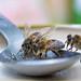 hungry bee-3
