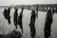 Old Wharf on the Willapa No. 14, Raymond, Washington, 2018 (Steve G. Bisig Photography) Tags: thatpnwlife visitpnw bestofthenorthwest blackandwhite blackandwhitephotography blackandwhitephoto bnw bnwaddicted bnwcaptures bnwcreatives bnwlife bnwmagazine bnwofourworld bnwplanet bnwphotography cascadia cascadiaexplored dock explorewashington fog foggy justgoshoot landscape landscapephotography livewashington nikon nikonnofilter nikonz7 northamerica northwest outdoorphotography outdoors pacificcounty pacificnorthwest pilings pnwbnw pnwdiscovered pnwexplored pnwisbeautiful pnwisbest pnwlife pnwwonderland raymond sonorthwest thenwadventure unitedstates upperleft upperleftusa usa wanderwashington washington washingtonstate washingtonexplored water wharf z7
