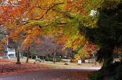 "Cincinnati - Spring Grove Cemetery & Arboretum ""Another Autumn Road"" (David Paul Ohmer) Tags: cincinnati ohio spring grove cemetery arboretum autumn fall road path"