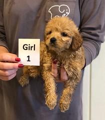 Kizzie Girl 1 pic 4 12-9
