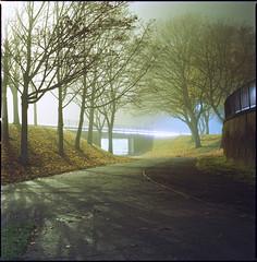 stevenage (steve-jack) Tags: hasselblad 501cm 80mm cb kodak ektar 100 film 120 6x6 hertfordshire stevenage night mist fog tetenal c41 kit epson v500