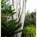 Botanics, The Scilly Isles, UK