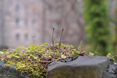 Starting Small (separatesunsets) Tags: architecture deanvillage edinburgh old scotland stockbrigde waterofleith